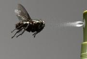 Repellenti insetti
